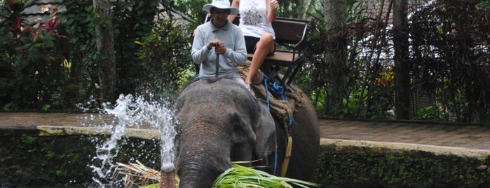 Bali Adventure Tours (Rafting & Elephant Ride) is one of Locais salvos de MK.