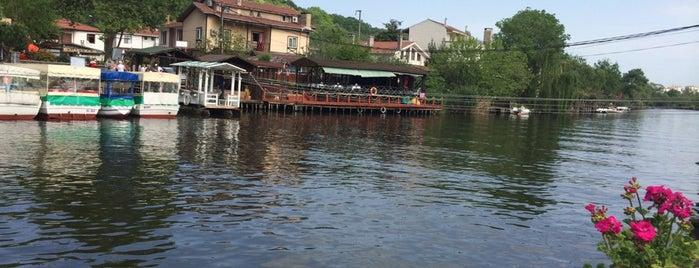 Acqua Verde Cafe Restaurant is one of Mg.