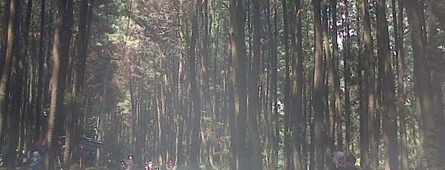 Taman Wisata Alam Gunung Pancar is one of Posti che sono piaciuti a Fellexandro.