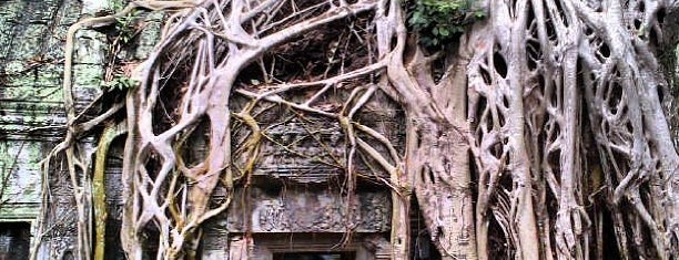 Ta Prohm is one of Siem Reap, Cambodia.