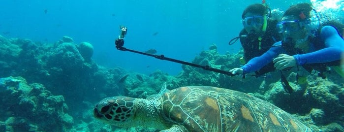 Great Barrier Reef Underwater is one of Australia - Must do.