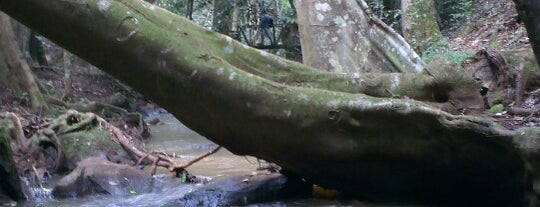 Karura forest is one of Buitenland.