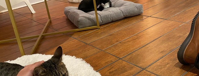 Pounce Cat Cafe is one of Savannah!.