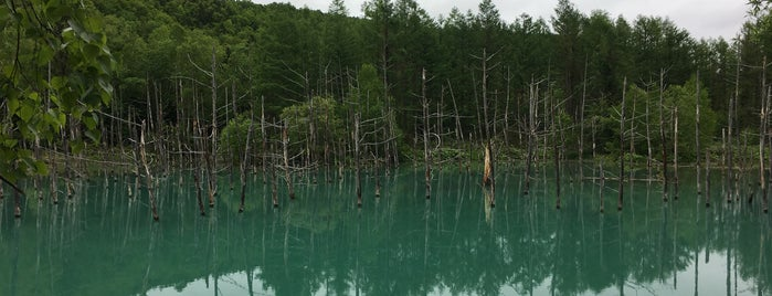 Blue Pond is one of キヨ 님이 좋아한 장소.