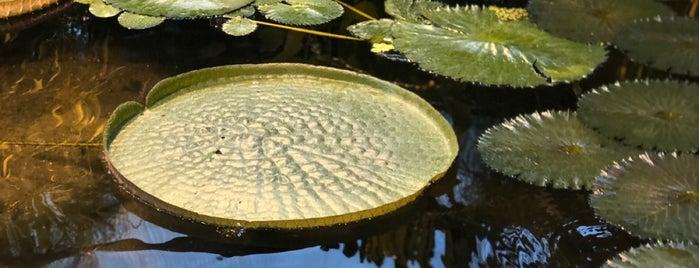 Оранжерея «Средиземноморские растения» is one of Lieux sauvegardés par Galina.