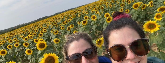 Sunflower Maze is one of North Fork.