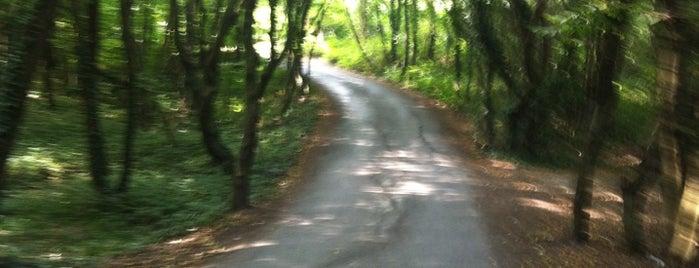 Kemer Country Orman Evi is one of Orte, die Yunus Emre gefallen.