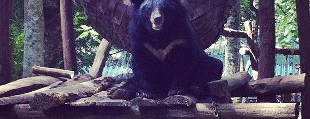 Bear Rescue Centre is one of Tempat yang Disukai Alyssa.