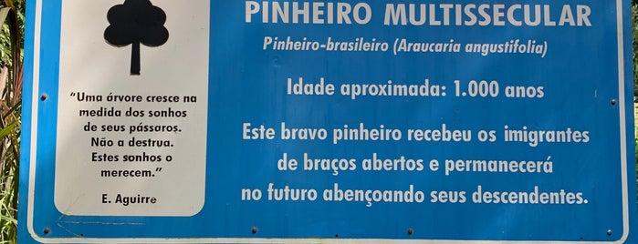 Pinheiro Multissecular is one of Nova Petrópolis.