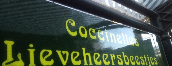 Coccinelles / Lieveheersbeestjes (STIB / MIVB) is one of Belgium / Brussels / Tram / Line 8.