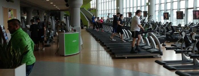 Calypso Fitness Club is one of faenza.