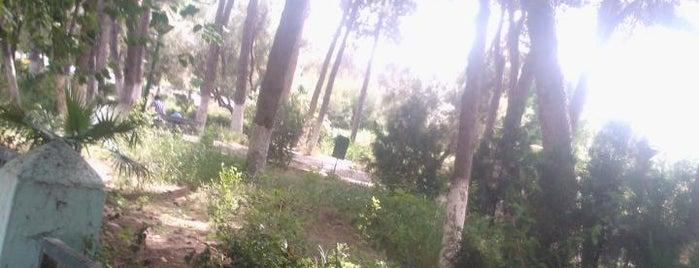 Tlemcen is one of Tempat yang Disukai Baris.