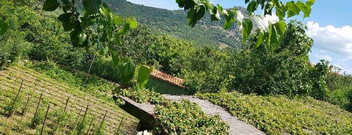 Yeşil Ev Zeytinliköy is one of Gökçeada.