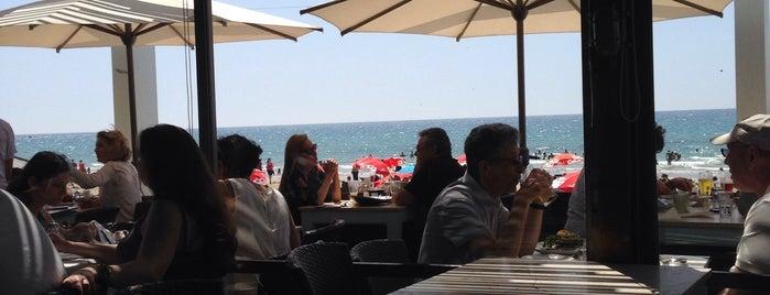 Manta Ray is one of Summer in Tel-Aviv.