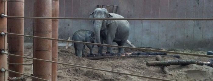 Elefanterne i ZOO is one of Locais curtidos por Christian.