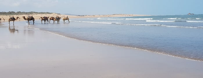 Beach Friends is one of Essaouira.