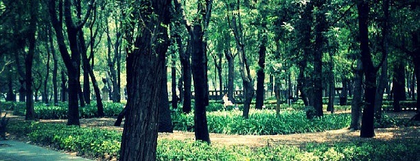 Bosque de Chapultepec is one of Domingo en CDMX.