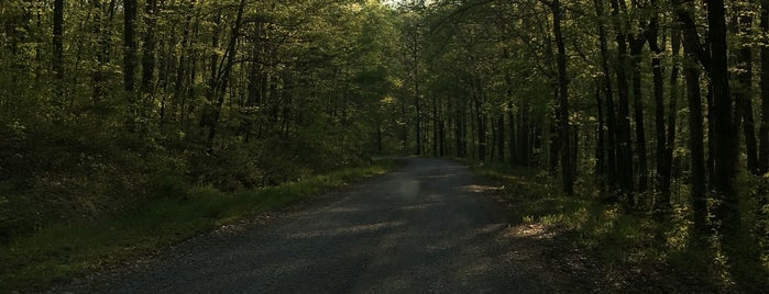 Shawnee National Forest- Lake Glendale State Park- Goose Bay is one of Illinois State Parks.