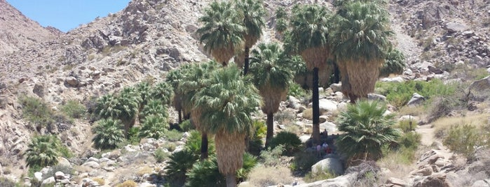 Fortynine Palms Oasis Trail is one of Psalm Sprangs.