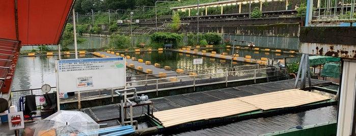 Ichigaya Fish Center is one of Lieux qui ont plu à Masahiro.