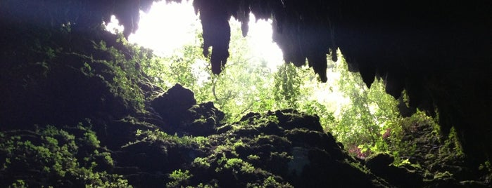 Las Cavernas del Rio Camuy is one of Puerto rico.