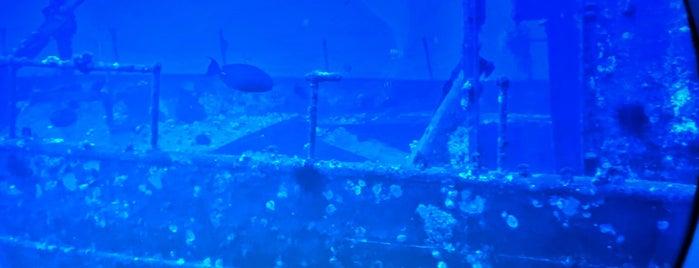 Atlantis Submarines Maui is one of Lieux qui ont plu à Nilay.