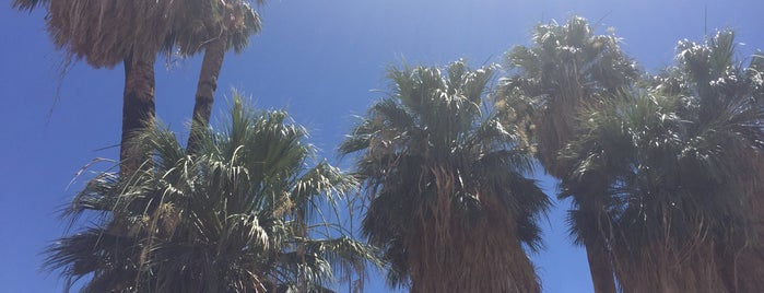 Oasis Visitor Center, Joshua Tree National Park is one of Nicoleさんのお気に入りスポット.