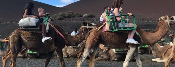 Echadero Camellos is one of Rafael : понравившиеся места.