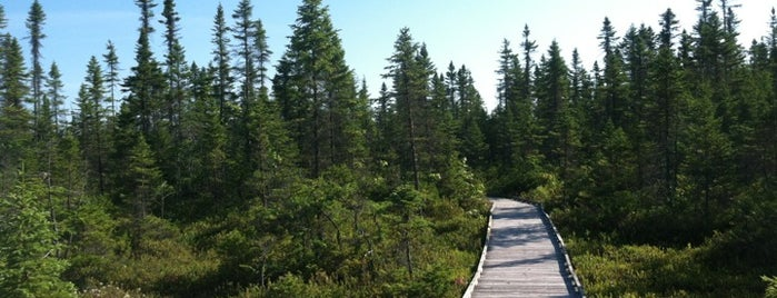 Orono Bog Boardwalk is one of Wishlist.