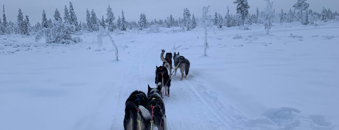 Dogsledging is one of Locais curtidos por Simona.