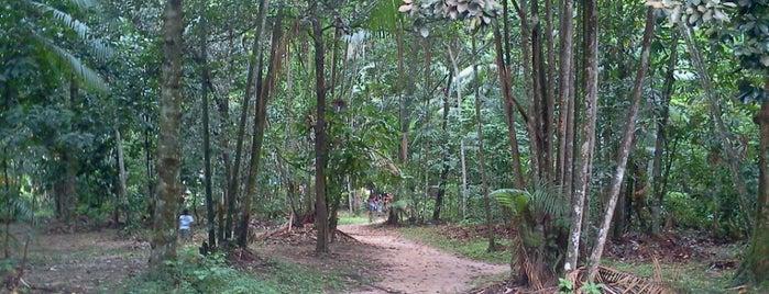 Conjunto Bairro Bosque Feliz Cidade is one of Tempat yang Disukai Leila.