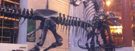 American Museum of Natural History is one of Fun Things for Kids to do in NYC.