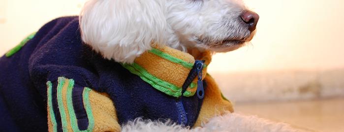 Cuidador De Perros - Dog Sitter Denis Marsili is one of Orte, die Den gefallen.