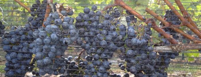 RdV Vineyards is one of Loudoun Ale Trail.