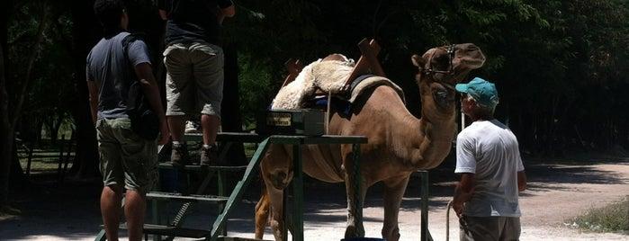 Recinto dos Camelos is one of Locais curtidos por Fábio.