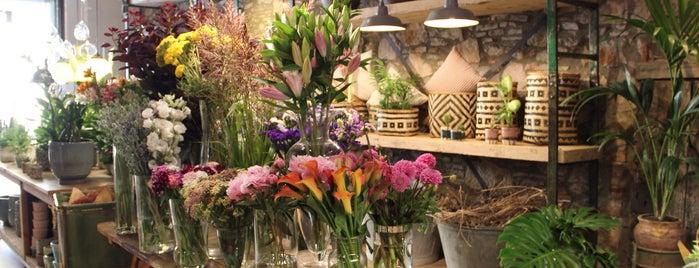 Muguet Flors i Regals is one of Gracia.