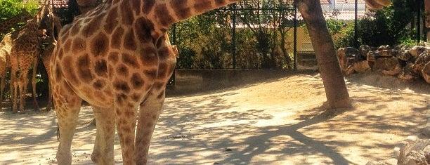 Jardim Zoológico de Lisboa is one of ~ curiosités /UK|FR|PT|etc.