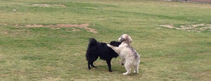Rancho Peñasquitos Linear Dog Park is one of Locais curtidos por Duyen.