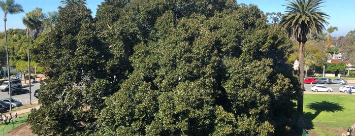 Moreton Bay Fig Tree is one of Locais curtidos por Alfa.