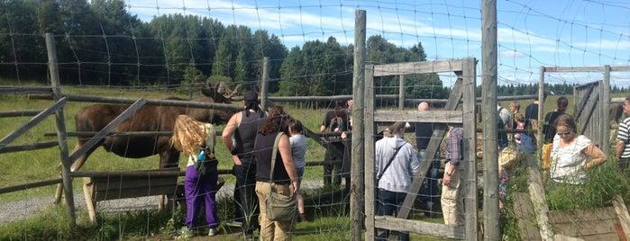Orrviken Moose Garden is one of Sweden.
