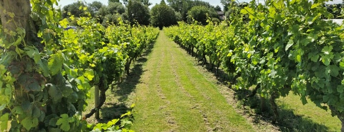 Mersea Island Vineyard is one of Orte, die Mike gefallen.