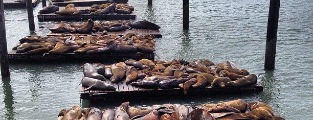 Sea Lions at Pier 39 is one of Lugares guardados de ᴡ.