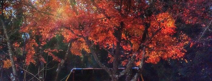 中ノ台公園 is one of Lugares favoritos de Yutaka.