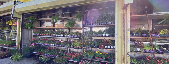 Nelly's Flower Shop is one of Misc..