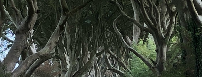 The Dark Hedges is one of Belfast.
