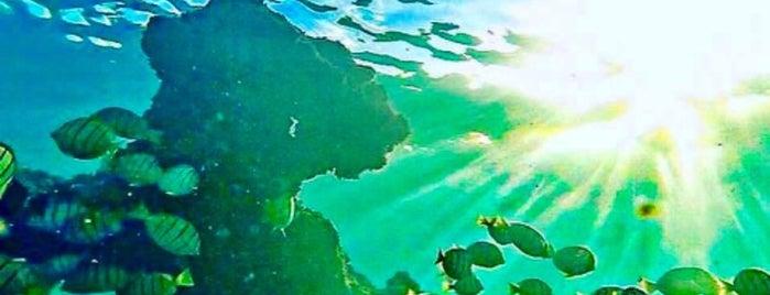 Hanauma Bay Nature Preserve is one of Lugares favoritos de Jesennia.