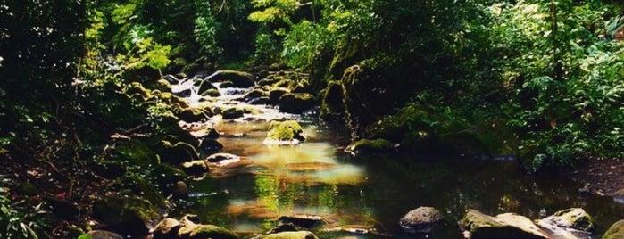 Judd Trail is one of Lugares favoritos de Jesennia.