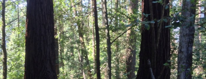 Henry Cowell Redwoods State Park is one of Lieux qui ont plu à IS.