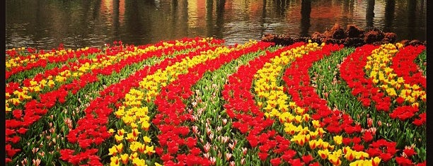 Keukenhof is one of Holanda.