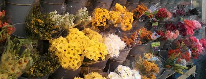 Belles Fleurs is one of P.